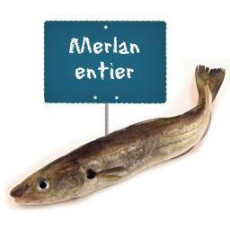 Merlan entier, préparé et vidé par votre poissonnier