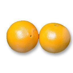 Oranges MALTAISE