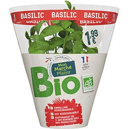 Basilic BIO