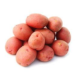 Pomme de terre de consommation ROUGE