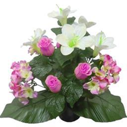 Rose hortensia lys en pot