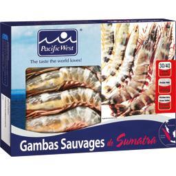 Gambas sauvages de Sumatra 30/40